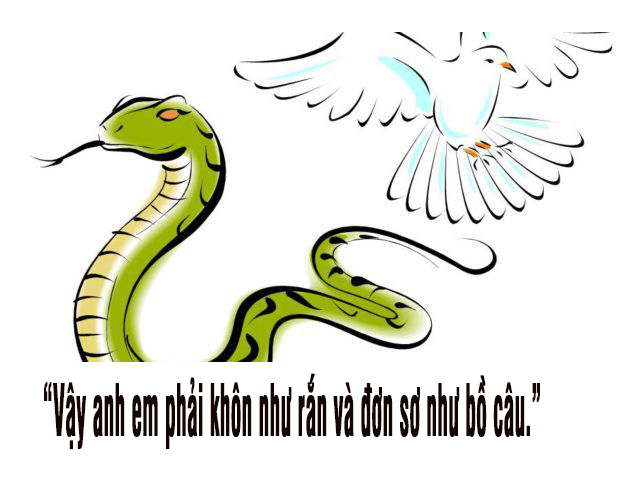 CẦN CÓ CẢ SỰ KHÔN NGOAN LẪN HIỀN LÀNH. Suy niệm Lời Chúa Thứ Sáu Tuần XIV Thường Niên
