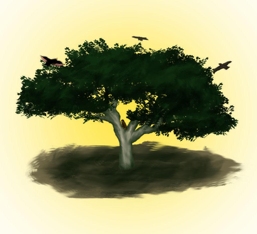 NƯỚC THIÊN CHÚA VẪN ĐANG LỚN LÊN.Suy niệm Lời Chúa Chúa Nhật XI Thường Niên.